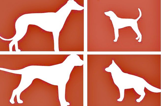 Dog Stencil Templates